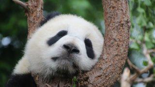 シロでもクロでもない世界で、パンダは笑う 見逃し