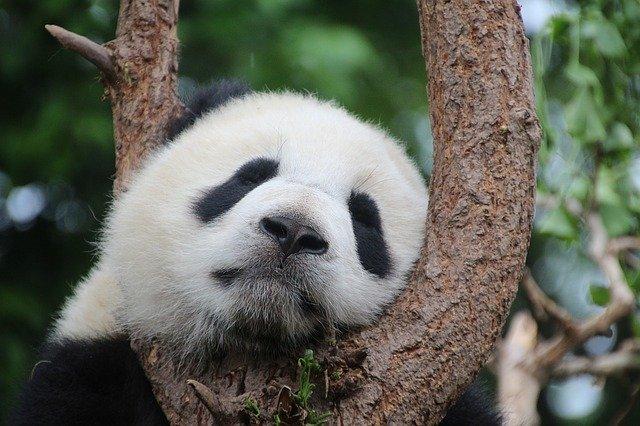 白 でも 黒 でも ない 世界 で パンダ は 笑う 評価